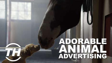 Adorable Animal Ads