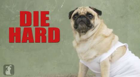 Pug Movie Makeovers