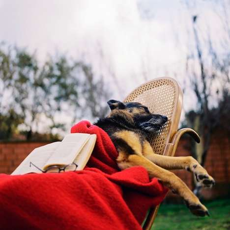 Whimsical Resting Animal Captures
