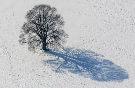10 Examples of Tree Photography