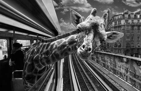 Animalistic Metro Rid Photography