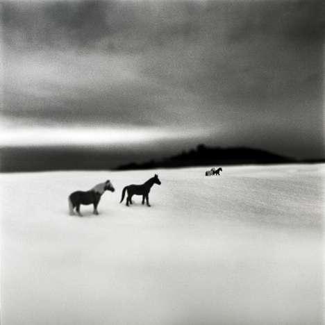 Somber Monochrome Animal Photograph