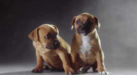Cute Puppy Video Campaigns