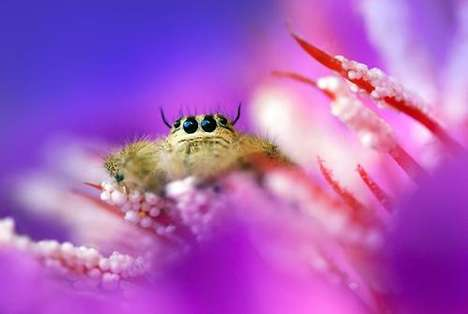 Macro Insect Photography