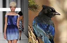 Avian Fashion