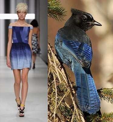 Avian Fashion