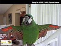 98 Avian Advances