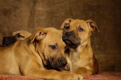 Poignant Shelter Dog Photography