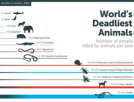 Deadly Insect Infographics