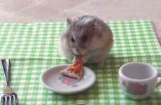 Adorable Rodent Meals - Tiny Hamster Eating Tiny Pizza is a Step Up from Eating a Burrito