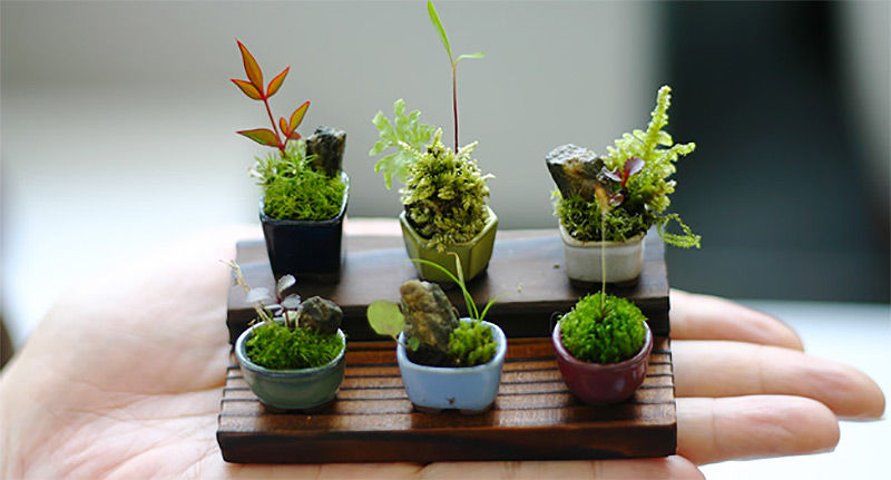 Ultra Small Bonsai Trees