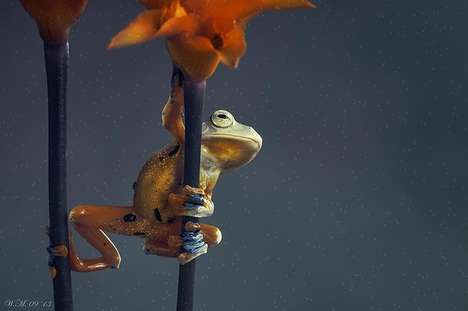 These Frog Photos Make Typically Gross Animals Absolutely Adorable