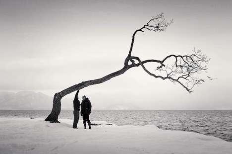 Photographic Japanese Tree Documentation