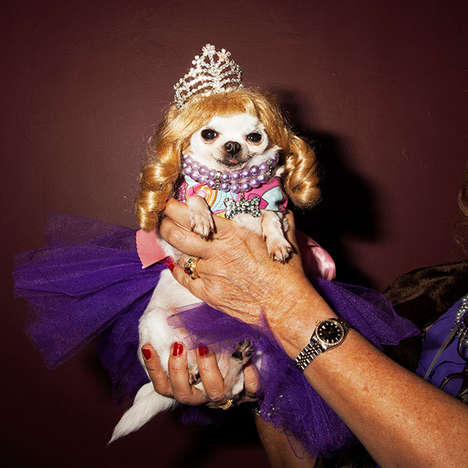 Bedazzled Pooch Photography