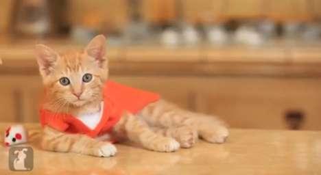 Cat Convict Remakes