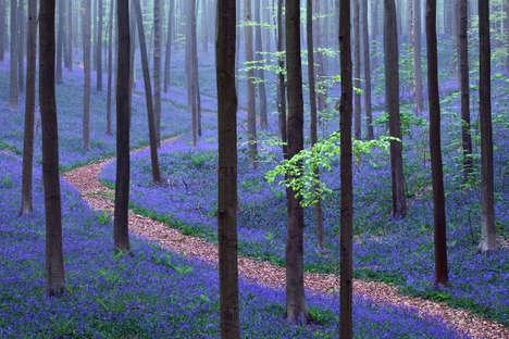 Flowering Forest Floors