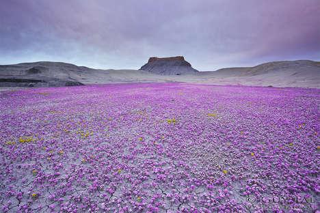 Floral Desert Photography