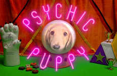 Psychic Soccer Puppies - Bailey the Psychic Puppy Makes World Cup Predictions