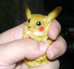 Real Life Cartoon  Pets - $925 Million Living Pokemon Pikachu