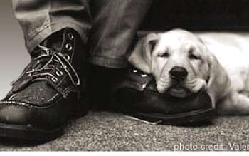 Companion Puppies for Wounded Veterans