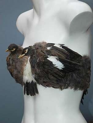 Avian Lingerie