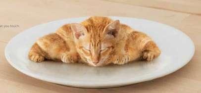Kitten Croissant Ads