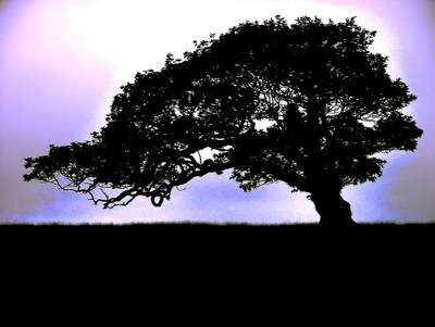 Respecting Arborial Elders