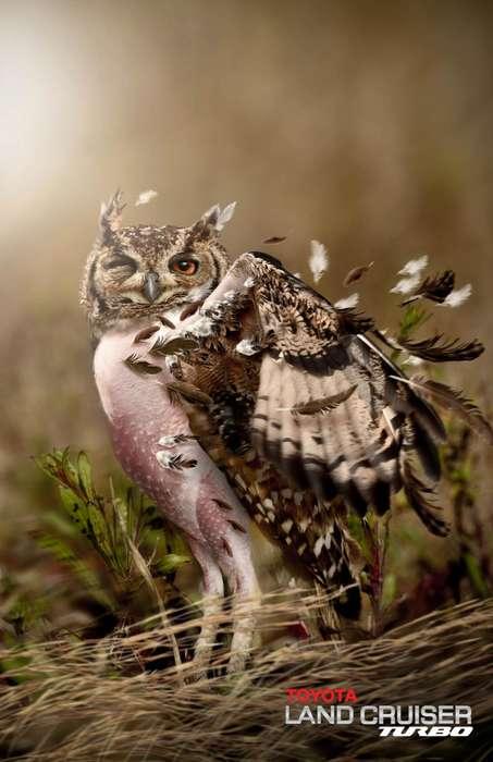 Windswept Wildlife Ads