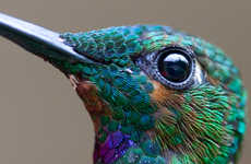 Macro Hummingbird Photography