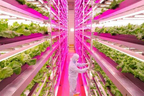 LED Lettuce Operations