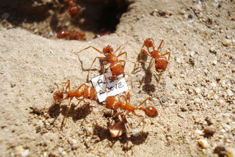 Ant-Focused Art Projects