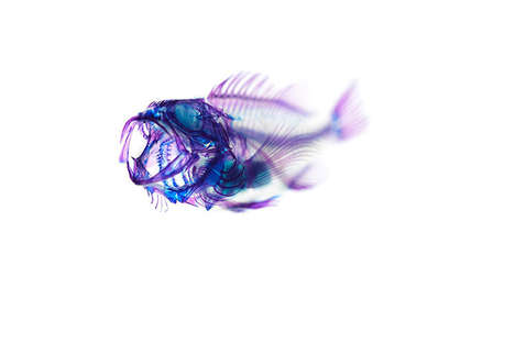 Fluorescent Fish Photography