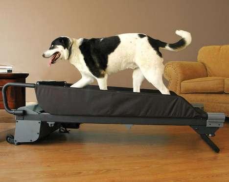 Pet Treadmills
