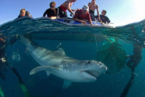 Shocking Shark Photography - In This Series We See How Sharks are Hunted for Their Fins and Meat
