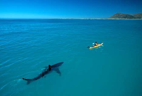Noble Shark Photography