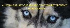 Doggy Rehab Facilities