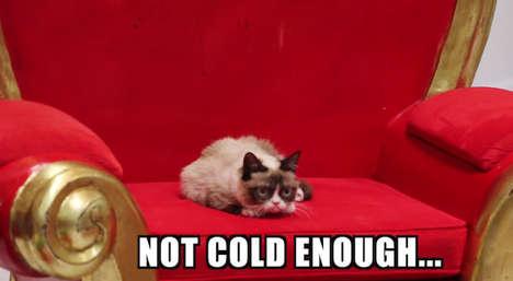 Icy Cat Meme Videos