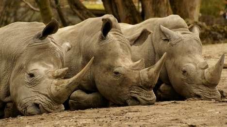 Rhino-Saving Drones
