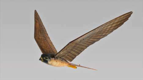 Robotic Raptors - The 'Robirds' Drones Are Used to Keep Nuisance Birds Away