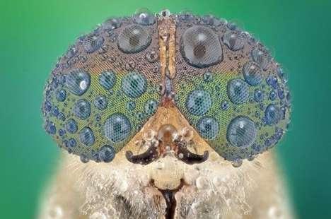 Close-Up Critter Captures