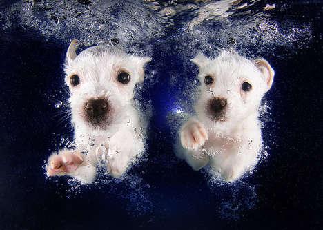 Swimming Dog Photography