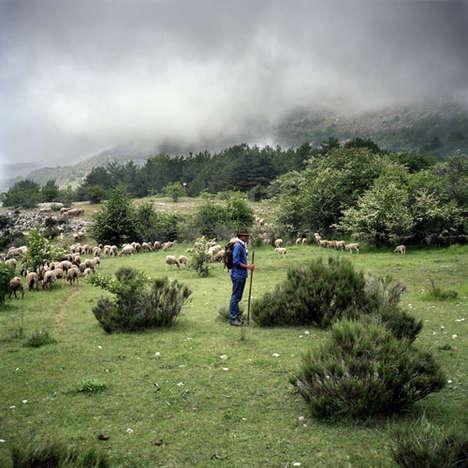 Isolated Shepherd Photography