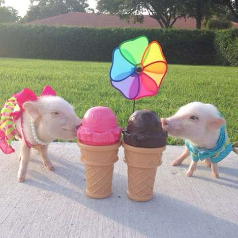 Stylish Teacup Pigs