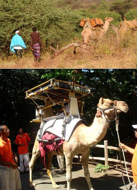 Eco-Friendly Mobile Coolers - Solar-Powered Fridges on Camels