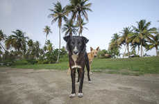 Abandoned Dog Photography - These Sad Photos Capture Stray Dogs In Puerto Rico's 'Dead Dog Beach'