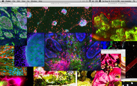Vivid Screenshot Collages