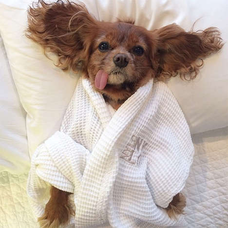 Hilarious Instagrammed Dogs