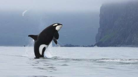 Killer Whale-Monitoring Drones