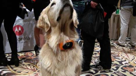 Connective Pet Collars