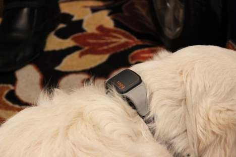 Temperature-Monitoring Pet Trackers